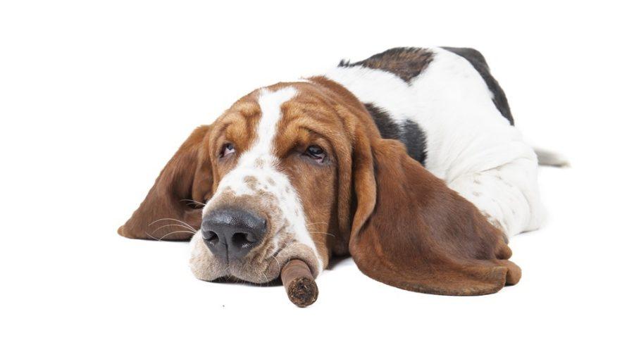 FUMO PASSIVO nel cane e negli animali domestici