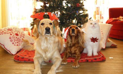 Cibi pericolosi per cani e gatti: il Cenone di Natale