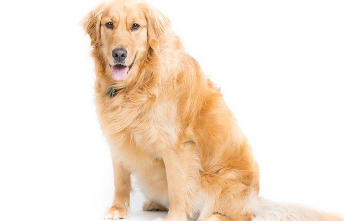 PRO LIGHT lo snack per i cani sovrappeso
